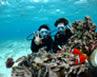 浮潛、潛水體驗